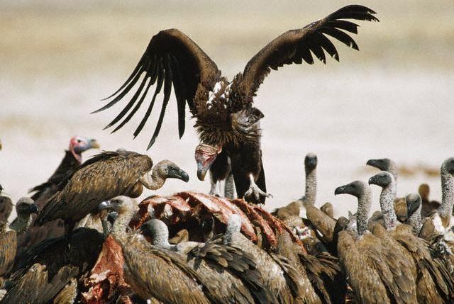 abutres O golpe em versos   Epílogo